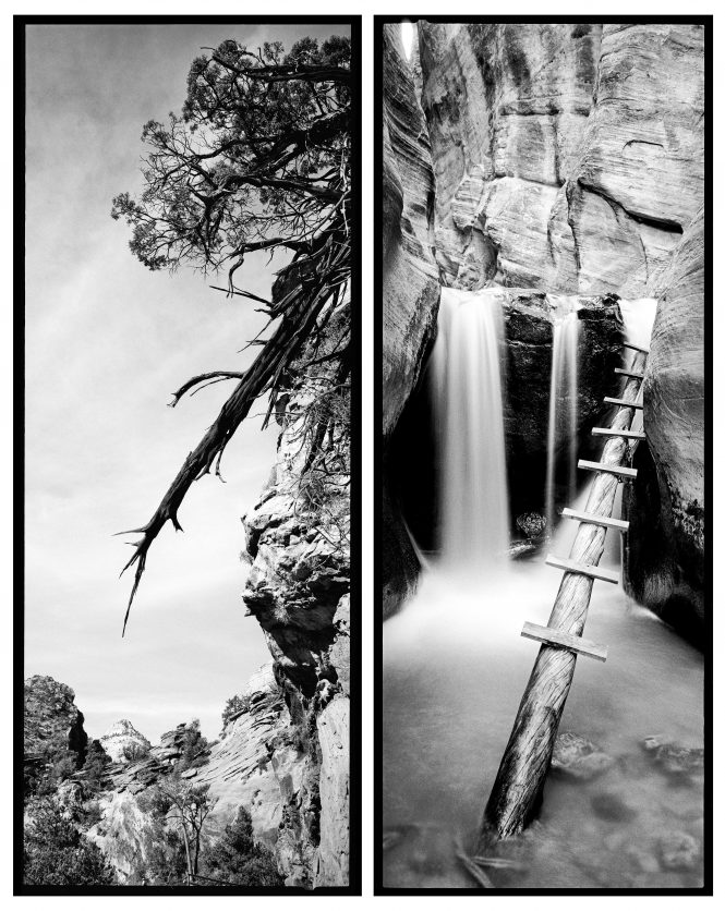 A tree slowly tumbles down a cliff along the Canyon Overlook trail, while a man-made ladder allows hikers to climb a waterfall in Kanarra Creek. In contrast to the natural cycle of dissolution, we are compelled to build and create.