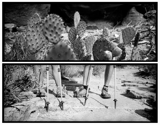 The points of cactus and hiking poles serve different but equally useful purposes in an unforgiving landscape. Zion National Park artist-in-residence, Sept. 2015.