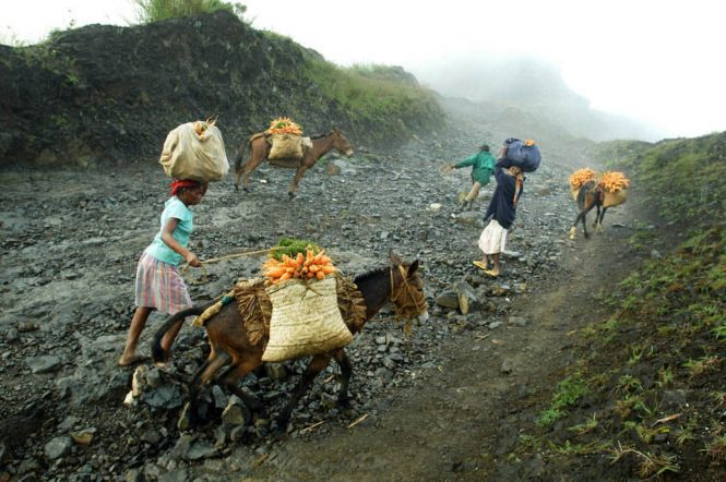 Exhausting Haiti's Forests - Mountain Caravan